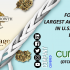 Curaleaf Holding: Forging the largest acquisition in U.S cannabis landscape