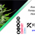 KushCo Holding Forays into New Hemp Trading Business