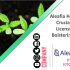 Aleafia Health Bags a Crucial Cultivation License in Canada, bolstering its Supply Chain